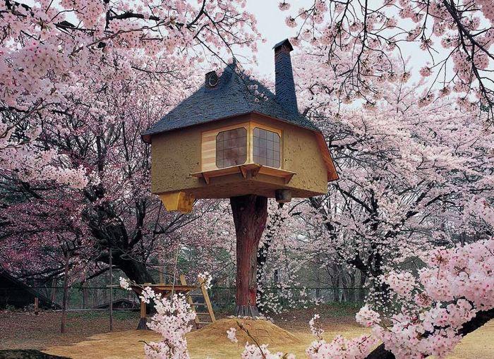 Чайный домик по сенью сакуры в цвету