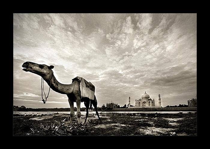 Тадж-Махал в необычном ракурсе: черно-белые снимки Тамера Аль-Тассана