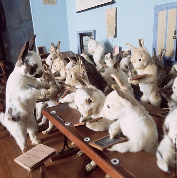 Кролики - это не только ценный мех: таксидермический музей Уолтера Поттера