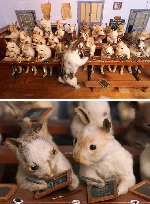 «Кроличья школа»: таксидермический музей Уолтера Поттера