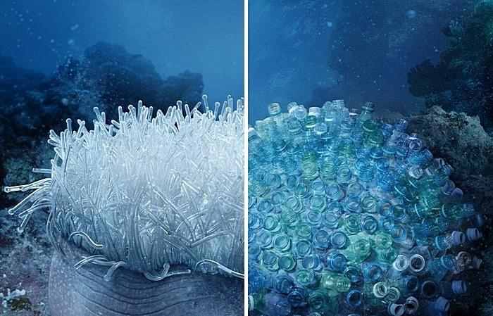 Пластиковая актиния и бутылочный коралл: зеленая реклама с морского дна