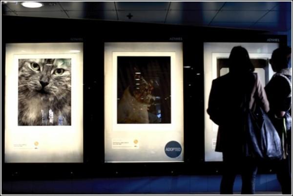 Постеры в городе: на среднем - заветная печать «Adopted»