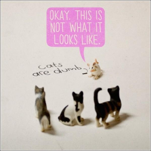 Надпись углем: «Кошки тупые». Мышь: «Так, это совсем не то, что вы думаете»