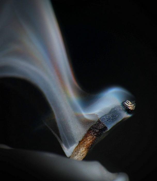 Дымный флёр: макрофотографии Гровера Шреера