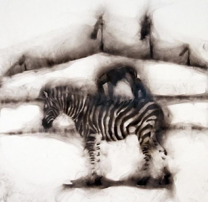 Цирковые зебры на туманной арене: фотокартины Роба Тарбелла, дорисованные дымом