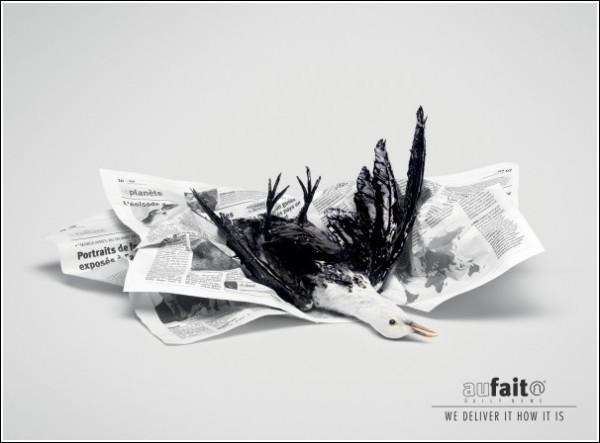 Газетная реклама из Марокко: птичку жалко