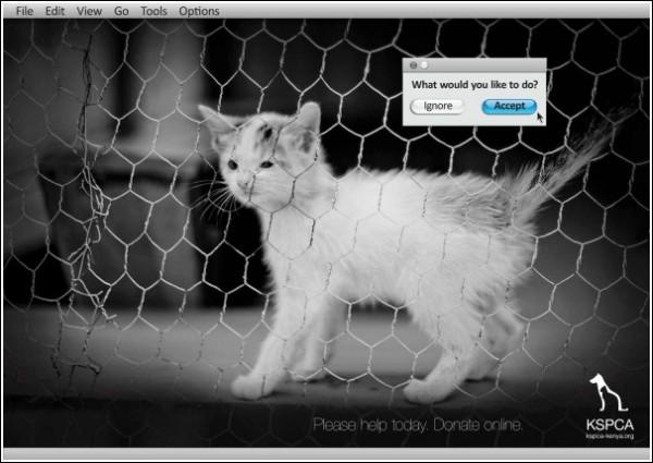 Реклама приюта для бездомных животных: котенок
