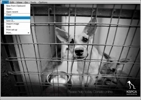 Реклама приюта для бездомных животных: собаки