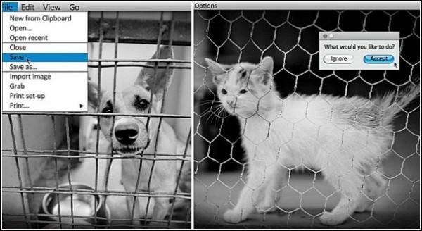 Взгляд с десктопа: реклама приюта для бездомных животных