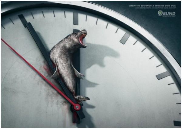 Минута до вымирания серого тюленя: шокирующая зеленая реклама