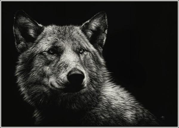 Волки в технике гратографии весьма убедительны