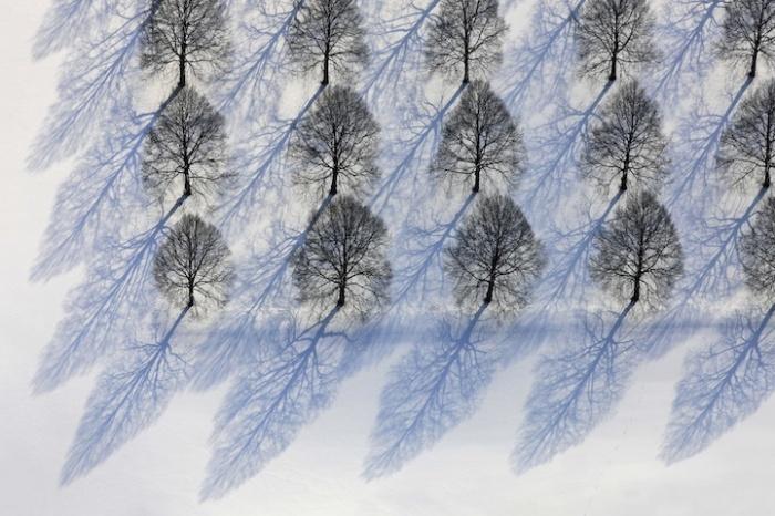 Голубые тени от деревьев: фотопейзажи Клауса Лейдорфа