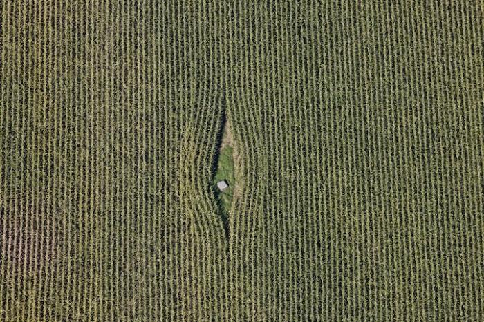 *Всевидящее око*: кукурузное поле с высоты птичьего полета