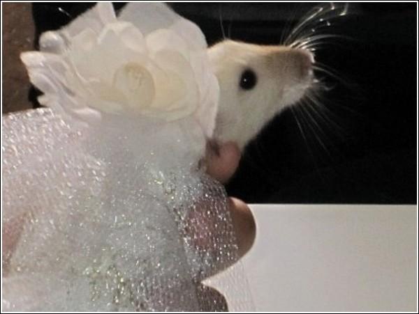 Необычные наряды для усатых леди: свадебное платье