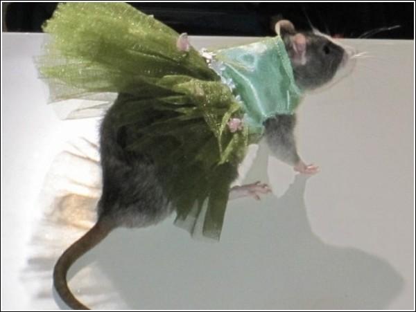 Необычные наряды для усатых леди: крысиный показ мод Ады Нивз