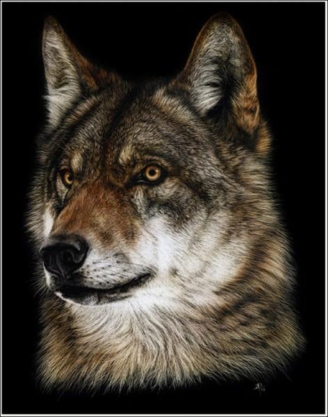 «Крашеный ли волк, стриженый ли волк, он всё равно не похож на пуделя»