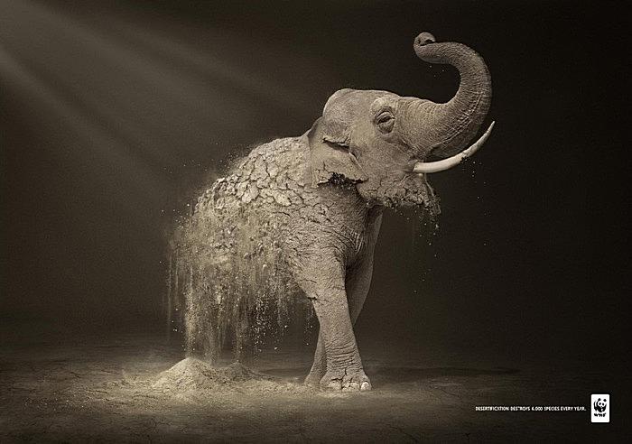 Проблема опустынивания в зеленой рекламе: слон