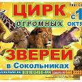 Цирк огромных зверей откроется 19 октября в Сокольниках