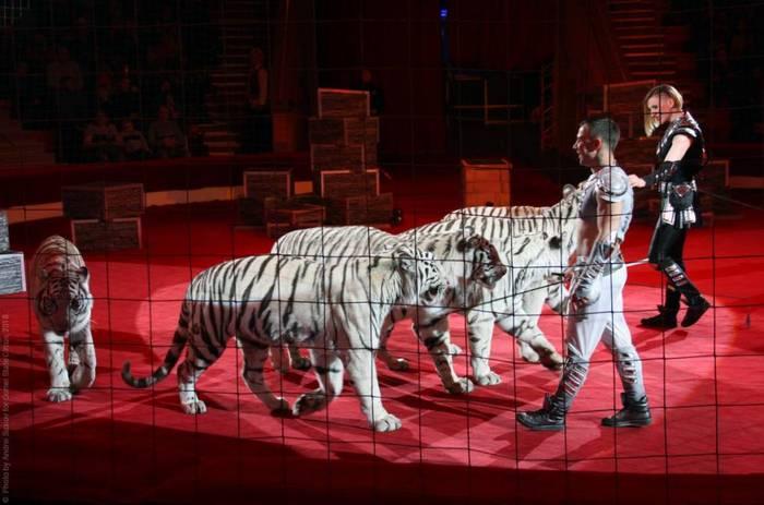 В Дарвиновском музее откроется выставка, посвящённая цирковому искусству