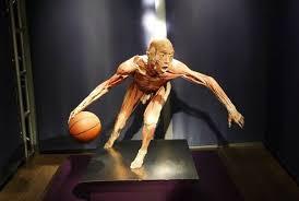 В Великобритании на выставке Real Bodies выставили части человеческих тел, которые могли принадлежать китайским диссидентам