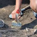 Археологи раскопали доисторический «огород» с картофелем