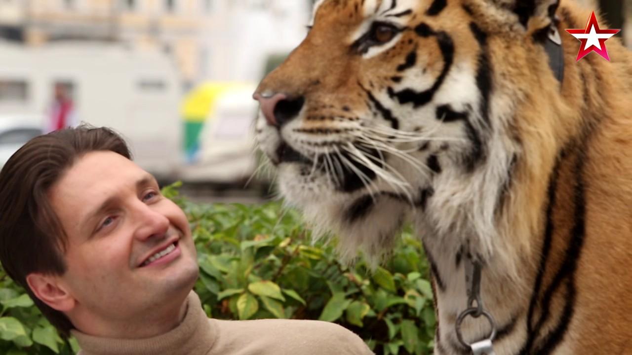 На дрессировщика Эдгарда Запашного во время выступления в цирке напала тигрица