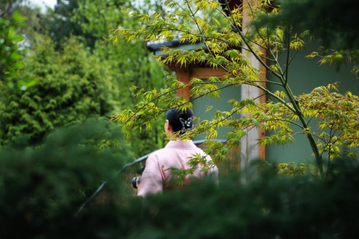 Фестиваль любования сакурой открылся в Ботаническом саду Санкт-Петербурга