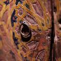 Исламскую выставку искусств привезут в Казань