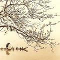 В Эрмитаже выставят современное искусство Японии