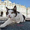 Француз оставил завещание эрмитажным котам