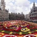 В августе в Брюсселе развернут цветочный ковёр