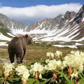Приехавшим на Камчатку туристам власти компенсируют по 3000 рублей