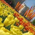 Майские праздники в Москве: куда сходить всей семьей