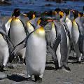 В хижине на Южном полюсе обнаружена картина, написанная 120 лет назад
