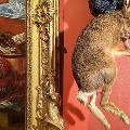 Минкульт прокомментировал выставку с чучелами в Эрмитаже