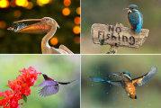 """Фотосессия """"На птичьих правах"""": из жизни пернатых"""