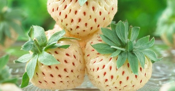 Помело фрукт - польза и вред для здоровья, калорийность