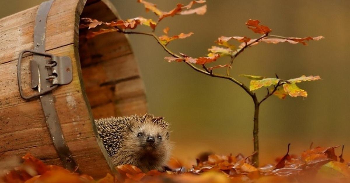 Фото животные лес осень (167 фото)