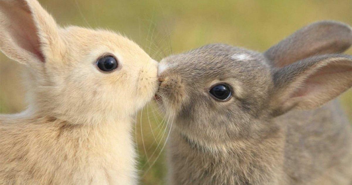 потолки смешные картинки целующихся животных характерно сначала гула