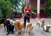 Собачий папа: мужчина заботится сразу о 735 собаках