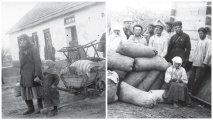 Коллективизация в СССР: жизнь украинской деревни в начале 1930-х годов