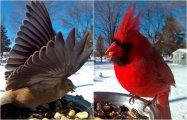 Птичьи «селфи»: 13 ярких снимков птиц, сделанных на кормушке при помощи фотоловушки