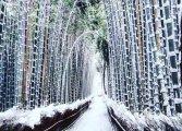 Волшебная аномалия: небывалый снегопад превратил Киото в удивительную зимнюю сказку