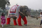 Спасение слонов: жители индийской деревни вяжут свитера для замерзающих животных