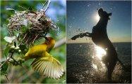 «Детский взгляд»: 14 работ победителей конкурса детской фотографии, которые удивили весь мир
