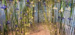Красочные инсталляции из сотни тысяч живых цветов