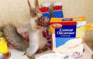 Белка Соня - звезда Новосибирска: как девушка спасла дикое животное от верной гибели