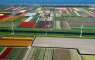 Поля тюльпанов: весенние аэрофотографии из Нидерландов