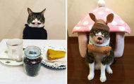 Самый терпеливый кот в мире: 300 нарядов для питомца с невероятным самообладанием