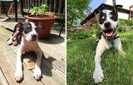 От щенка до взрослой собаки: 20 милых фотографий домашних любимцев, которые выросли очень быстро
